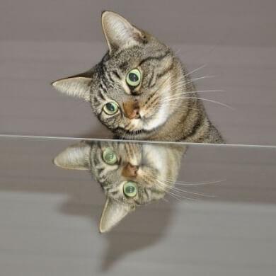 gato espejo comedor hogar armonía belleza
