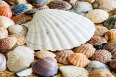conchas marina reciclaje decorativas marcos espejos cuadros fotos